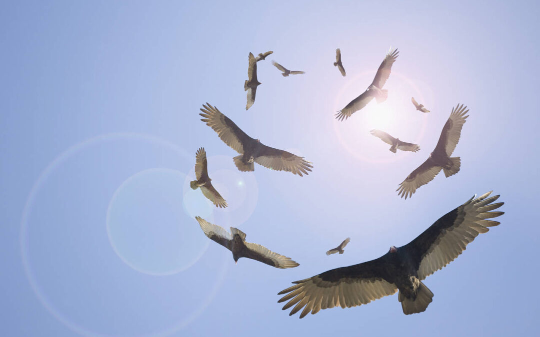 Private equity vultures circle the stragglers