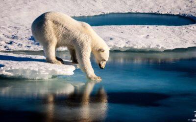 PE firms should set emissions targets to help reach net zero, report urges